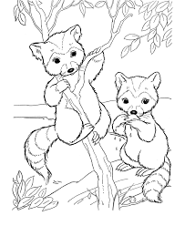 Small Picture Wild Animal Coloring Pages Bandit face raccoon Coloring Pages