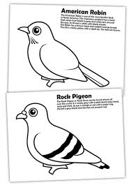 Small Picture Diffrence of American Robin and Rock Pigeon Coloring Page