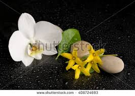 spa decor white orchid drop