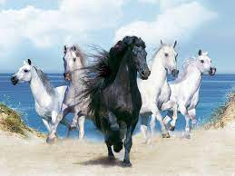 Desktop Wallpaper Hd White Horse