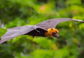 <b>Bat wings</b> inspire unique <b>design</b> of miniature robot aircraft   Imperial ...