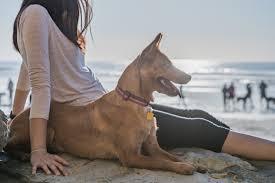 Spiagge dog friendly in Italia | zooplus Magazine per cani