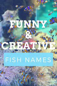 Creative Titles For Math Projects 300 Funny And Clever Fish Names Pethelpful