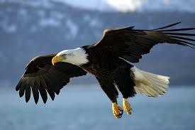 Small Picture Imagine Sing Learn 2A Everything Eagle North Shore Kid and
