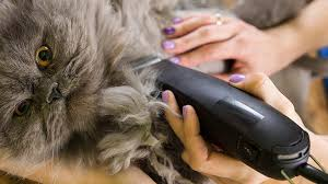 best cat hair clippers top 5 trimmers