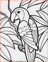 coloring book birds parrot coloring pages cinderella
