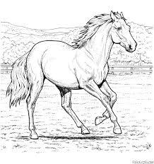 Cavallo 4 Disegni Da Colorare Per Adulti Con Disegni Di Cavalli Da