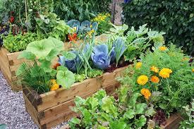 let s make a kitchen garden in 10 easy steps