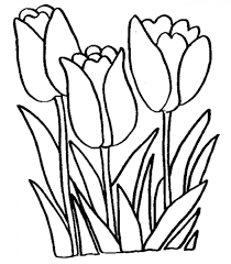 Free Tulip Coloring Pages With Printable Tulip Coloring Pages For