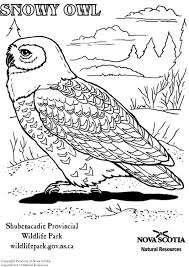Small Picture Coloring page snowy owl img 6006