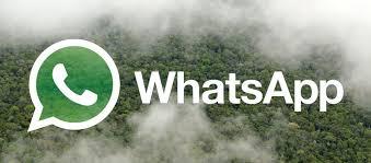 Partagez nos pétitions avec WhatsApp ! - Sauvons la Forêt