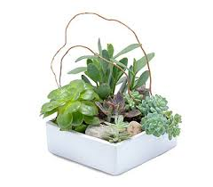 Small Picture Stunning Succulent Garden in Eugene OR The Shamrock Flowers Gifts
