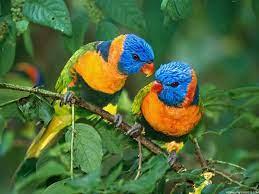 Free download birds wallpaper download ...
