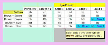 Eye Color Genetics Chart Eye Color Chart For Kids Bedowntowndaytona Com
