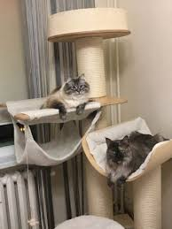 Diy cat playhouse Tree Home Interior Diy Cat Kicker Toy Diy Cat House Diy Cat In The Hat Hat Template Storagenewsletterinfo Diy Cat Tree Ikea Luxury Cat Scratching Post Bambulei Home Design