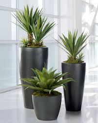 best indoor plants for office. Best Indoor Plants For Office