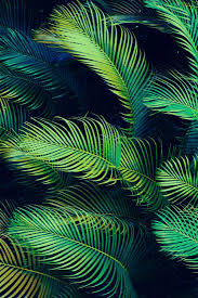 palm trees tumblr vertical. CH: I Plan On Using A Palm Frond Or Other Tropical Leaf Pattern As The Background For My Napkin. Trees Tumblr Vertical