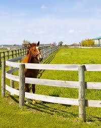wood farm fence. Farm Fence With Horse Wood