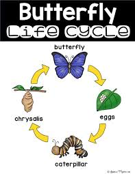 Butterfly Life Cycle Unit For Kindergarten First Second