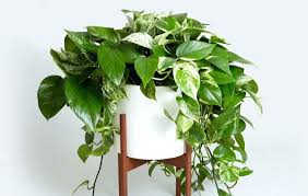 office indoor plants. Cool Indoor Plants Office Inspirations Fake Brisbane