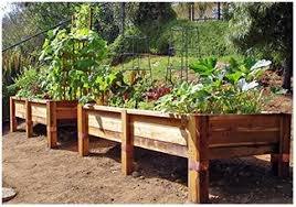 Small Picture I want to grow a vegetable garden in my backyard Im thinking a