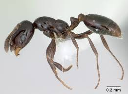 Tiny Black Ants Kitchen What Are Those Ants In My House Atlantic Pest Solutions