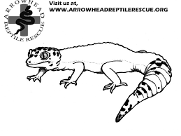 Small Picture Leopard Gecko Coloring Pages A Coloring Page For Children With