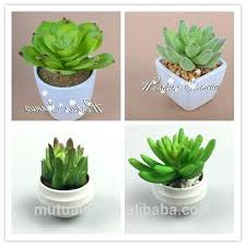 small plant for office desk. desk small potted deck plants best artificial mini succulent plant for office a