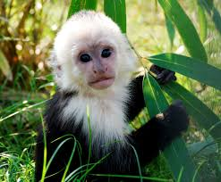 real jungle animals monkeys. Beautiful Animals With Real Jungle Animals Monkeys