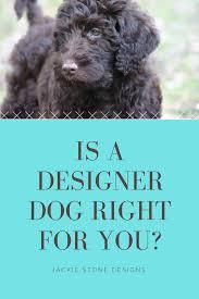 Labradoodle Designer Dogs