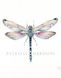 9x7 Watercolour Dragonfly No5 Handpainted Not A Print