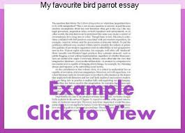 Essay on pet animals parrot