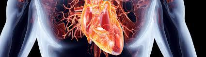 """Résultat de recherche d'images pour """"cardiologie"""""""