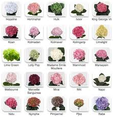 flower types with pictures peonies by color via hyperactive farms