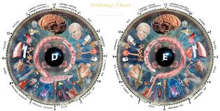 Iridology Diagnosis Chart The 10 Best Educational Chart In Iridology Diagnosis Chart