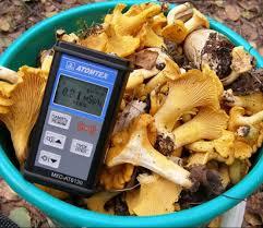 радиация в грибах