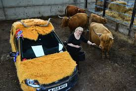 Highland cow car wins best in show - Daily Record