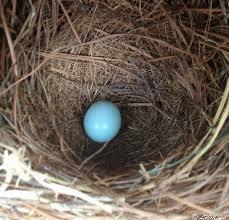 first bluebird egg of 2016