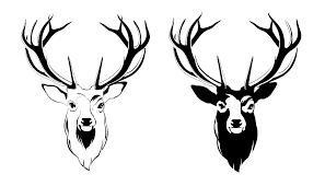 Drawing Deers Moose Head Picture 1630232 Drawing Deers
