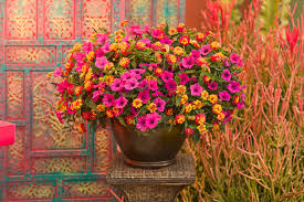 Find This Pin And More On Container Garden Flowers For Amberton Container Garden Ideas Full Sun