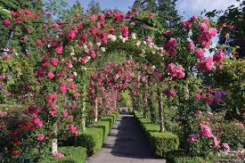 vibrant victoria the inside guide to the butchart gardens season of bloom clipper vacations