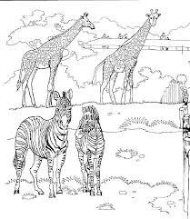 Kids N Fun Kleurplaat Giraffe Giraffen In De Dierentuin