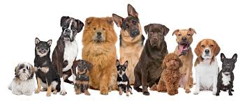 lots of dogs together. Delighful Lots Group Of 12 Dogs With Lots Of Together