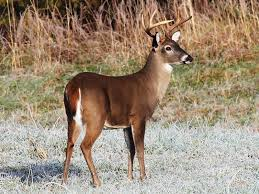 deer shooting over bait now legal throughout georgia