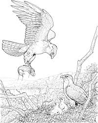 Small Picture wildlife coloring pages 6357 Bestofcoloringcom