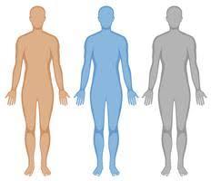 Human Body Free Vector Art 16 526 Free Downloads