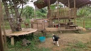 goat house design in the philippines