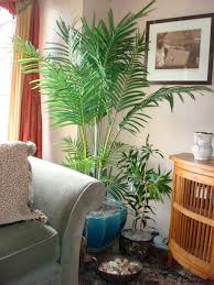 Artificial palms in living areas