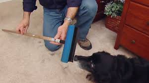Easy Way to Remove Pet Hair from Carpet