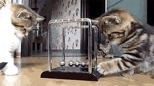 How To Stop Cats Scratching Furniture My Pet Warehouse